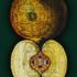 20130710013703-toledo_newtonsfruit