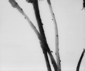 Tonic (Lotus) , Zhou Tiehai