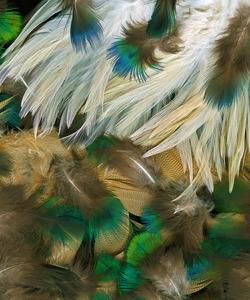 20130718201308-cockerelplumage