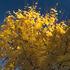 20130725172142-tree_1_sn