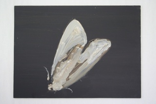 Moth, Richard Walker