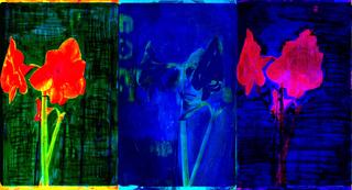 Amyrillus x 3, Ted Willis