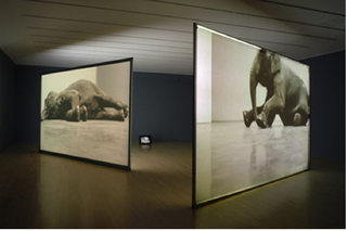 Play Dead; Real Time,Douglas Gordon