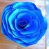 20130813233136-rudi_molacek_rose