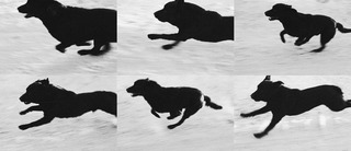 From, Dogs Chasing my Car in the Desert, D24 Run Sequence, John Divola