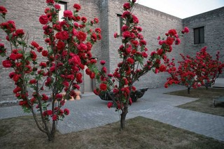 Winter Garden, Choi Jeong Hwa