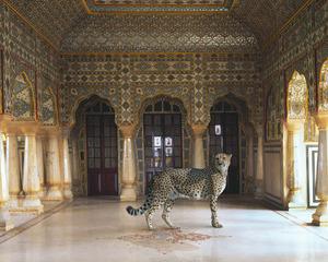 The Return of the Hunter, Sheesh Mahal, Jaipur City Palace, Jaipur, Karen Knorr
