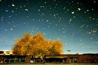 Gold Autumn: Urban Amber, Han Bing