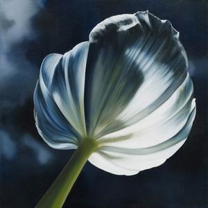 20130906192501-when_flowers_turn_their_backs_2000_x_2000