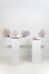 Coral Installation #1, Maria Isabel Henao