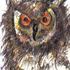 20130911051239-birding_series_eurasian_eagle_owl_