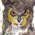 20130911051503-birding_series_blakiston_s_fish_owl__the_fisherman