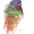 20130911052021-birding_series_painted_bunting__spontaneous