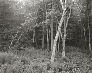 Woods, Port Clyde, Maine, George Tice