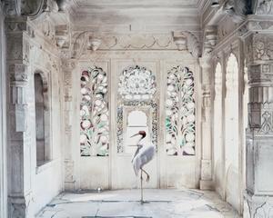 A Place Like Amravati, Udaipur City Palace (Sarus Crane), Udaipur, Karen Knorr