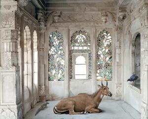 A Place Like Amravati, Udaipur City Palace (Nilgai), Udaipur, Karen Knorr