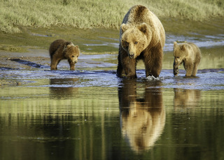 Bear Family at the Slough, Beverly Gates