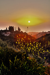 Mustard Sunset, George Gelb