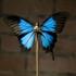 Papilioulysseswatermark