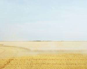 Wheat Harvest, Sarah Christianson