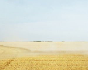 20130930091213-wheat-harvest-color
