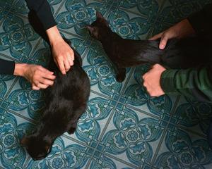 Cats, Lance Brewer