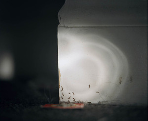 20131018190101-swarm