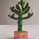 20131031075024-ashton_monkey_puzzle_tree_copy