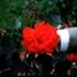 20131113203953-bloom-1sm
