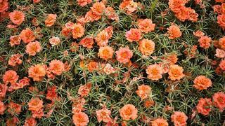 Flowers, Melissa Spitz