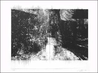 Ghost Print Grove, Annie Lapin