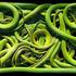 20131214161740-tf00007_timflach_green_snakes