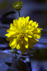 Rhapsody_in_blue_and_yellow_1