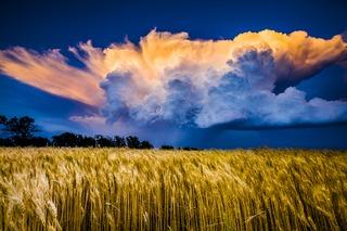 Fields of Glory, David Mayhew