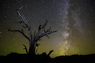 Eternal Skies, David Mayhew
