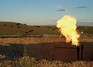Natural gas flare from oil well adjacent to cattle pasture, White Earth River Valley, Sarah Christianson