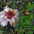 20140116050211-flora6