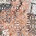 20140201231702-wallpaper_9_8
