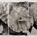 20140205010052-rosecircle-naturabeautyexhibition