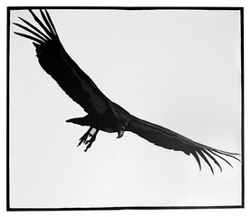 Antipainting (California's Wicked Beasts -- Condor for Cosmic Purposes), Mark Roeder