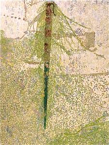 20140211121741-reflection_tree_parma