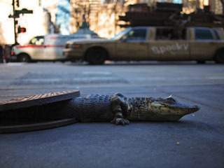 Sewer Gator, Chris Farling