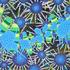 20140225202023-hydrozoa_blue_buttons_sm