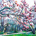 20140313154301-blossoms
