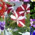 20140317165350-flower_garden_montage_2030