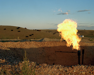 20140321183752-20130928_120-34-04_flare-cattle_flat