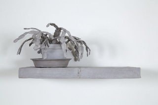 Still Life Plant, Daphne Wright