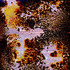 20140331031239-andrew_k_thompson_penetrating_the_veil_20_chemically_altered_chromogenic_print_8x10_inches_nu20