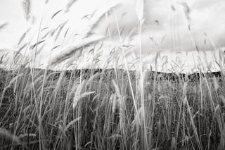Blowing Grasses, Jeffrey Conley
