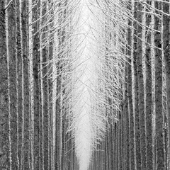 Tree Cathedral,Jeffrey Conley